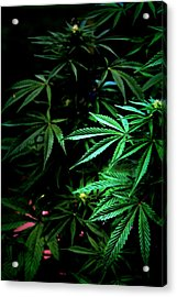 Acrylic Print featuring the photograph Nature's Medicine by Jeanette C Landstrom