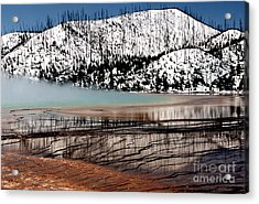 Nature's Mosaic I Acrylic Print by Sharon Elliott