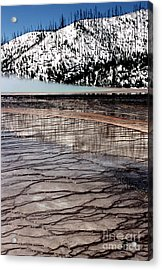 Acrylic Print featuring the photograph Nature's Mosaic II by Sharon Elliott