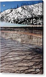 Nature's Mosaic II Acrylic Print by Sharon Elliott