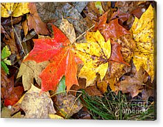 Acrylic Print featuring the photograph Nature's Palette by Jim McCain