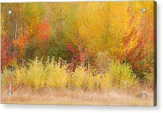Nature's Palette Acrylic Print by Paul Miller