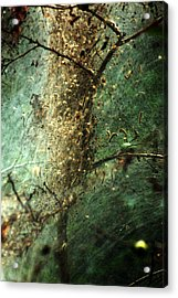 Natures Past Captured In A Web Acrylic Print
