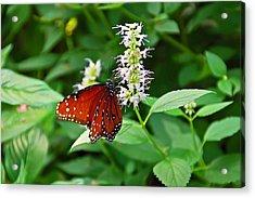 Natures Perfection Acrylic Print