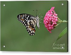 Natures Perfections Acrylic Print by Gary Bridger