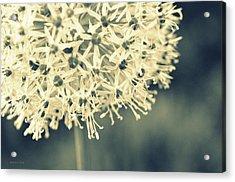 Nature's Popcorn Ball Acrylic Print