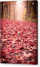 Nature's Red Carpet Revisited Acrylic Print by Edward Fielding