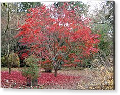 Nature's Red Acrylic Print by Linda Prewer