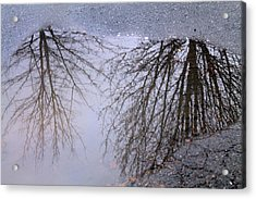 Acrylic Print featuring the photograph Nature's Reflection  by Candice Trimble