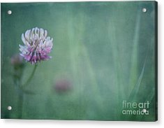 Natures Scent Acrylic Print by Priska Wettstein