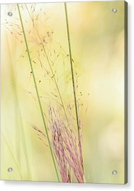 Natures Serenity Acrylic Print by Camille Lopez
