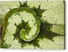 Natures Spiral Acrylic Print