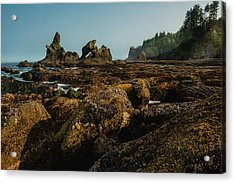Natures Way Acrylic Print
