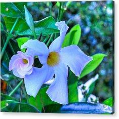 Flower 14 Acrylic Print