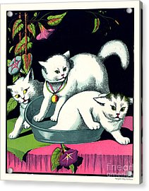 Naughty Cats Play In Tub On Table With Morning Glories Acrylic Print by Pierpont Bay Archives