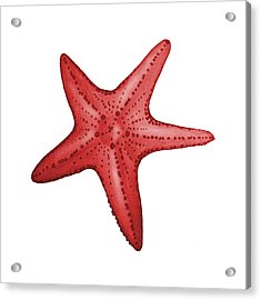 Nautical Red Starfish Acrylic Print by Michelle Eshleman