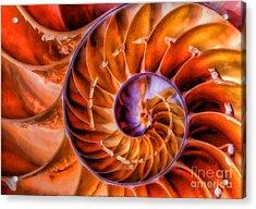 Nautilus Acrylic Print by Clare VanderVeen
