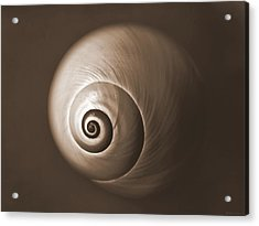 Nautilus In Sepia Acrylic Print by Deborah Smith