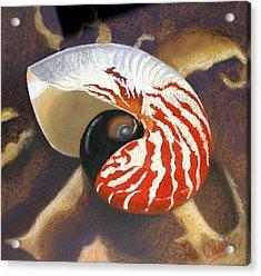 Nautilus  Acrylic Print by Karen Casciani
