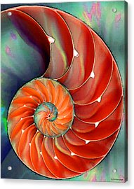 Nautilus Shell - Nature's Perfection Acrylic Print