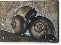 Nautilus Shells In Sepia Acrylic Print
