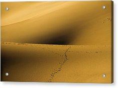 Navel Of The Dunes Acrylic Print
