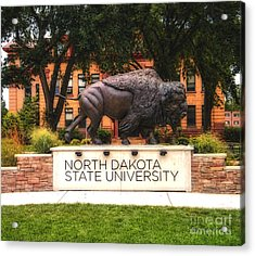 Acrylic Print featuring the photograph Ndsu Bison by Trey Foerster