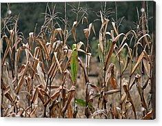 Neball Corn Field Acrylic Print