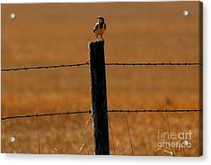 Nebraska's Bird Acrylic Print by Elizabeth Winter