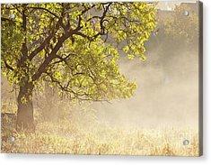 Nebulous Tree Acrylic Print by Heiko Koehrer-Wagner