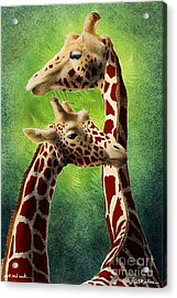 Neck And Neck... Acrylic Print by Will Bullas
