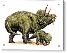 Nedoceratops Dinosaurs Acrylic Print