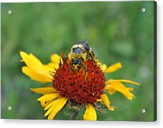 Need More Pollen Acrylic Print