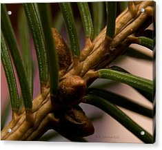 Acrylic Print featuring the photograph Needlescape 5 by WB Johnston