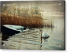 Neglected Acrylic Print by Alfio Finocchiaro