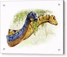 Nemegtosaurus Dinosaurs Acrylic Print