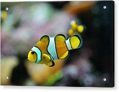 Nemo From Barcelona Acrylic Print by Stephan Yankov