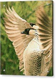 Nene Goose Acrylic Print