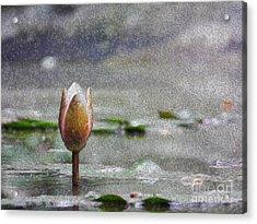 Nenufares Water Lilies Oleo Acrylic Print