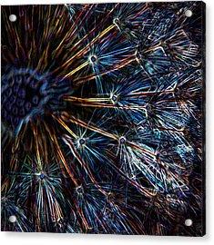 Neon Dandelion Acrylic Print