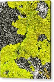 Natures Neon Acrylic Print