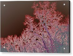 Neon Trees Three Acrylic Print