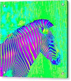 Neon Zebra 2 Acrylic Print by Jane Schnetlage