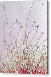 Nerve Cell Culture Acrylic Print by Steve Gschmeissner