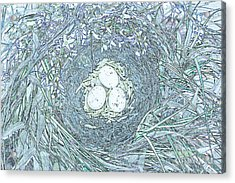 Nest Eggs By Jrr Acrylic Print by First Star Art
