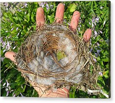 A Nest In Hand Acrylic Print by Bruce Carpenter