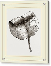 Nest Of Lilac-leaf-roller Acrylic Print by Litz Collection