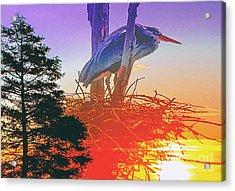 Nesting Heron - Summer Time Acrylic Print