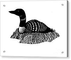 Nesting Loon Acrylic Print