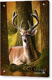 Acrylic Print featuring the photograph Nestled In The Woods by Kathy Baccari
